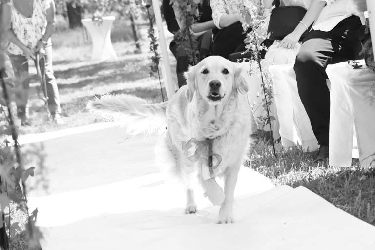 Hochzeit Landgut Kemmler