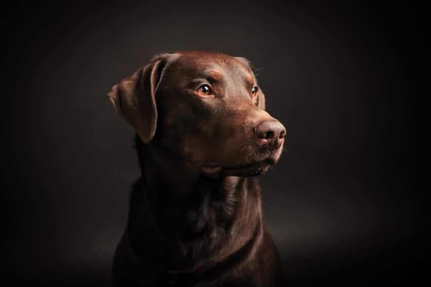 stuttgart hundefotograf