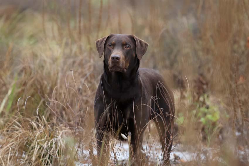 fotograf hunde tiere stuttgart